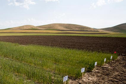 USU Scientists Among Funding Recipients To Study Wise Use of Fertilizers